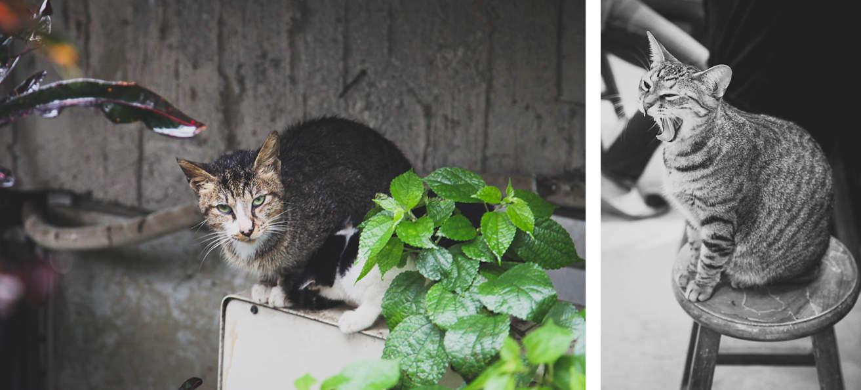 Juifen-cats