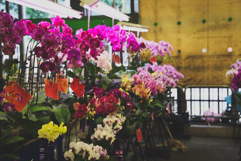 Taipei Flower Mart