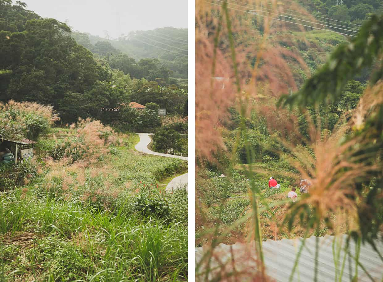 Taipei Tea Gardens Working