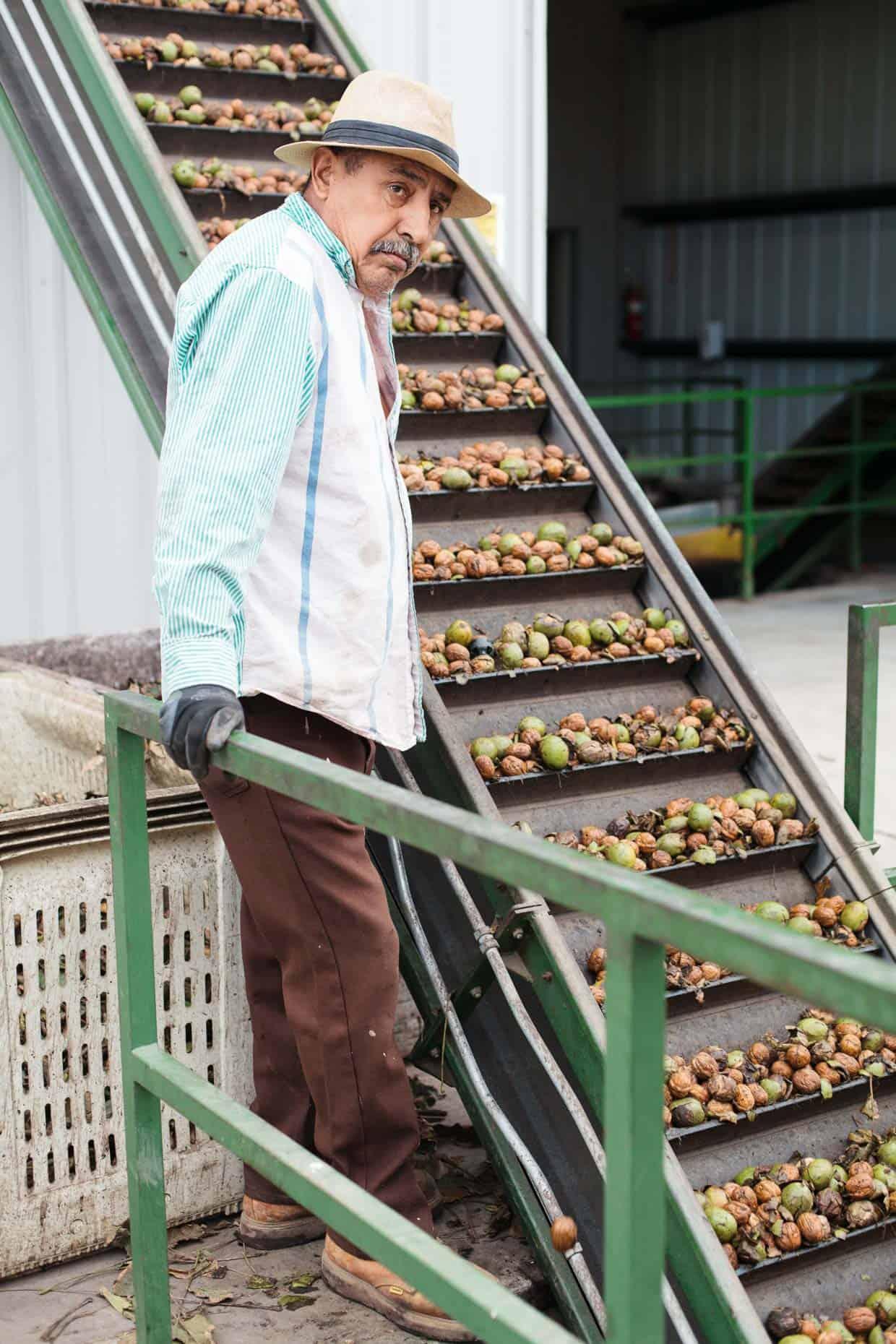 Walnut Harvest Hulling