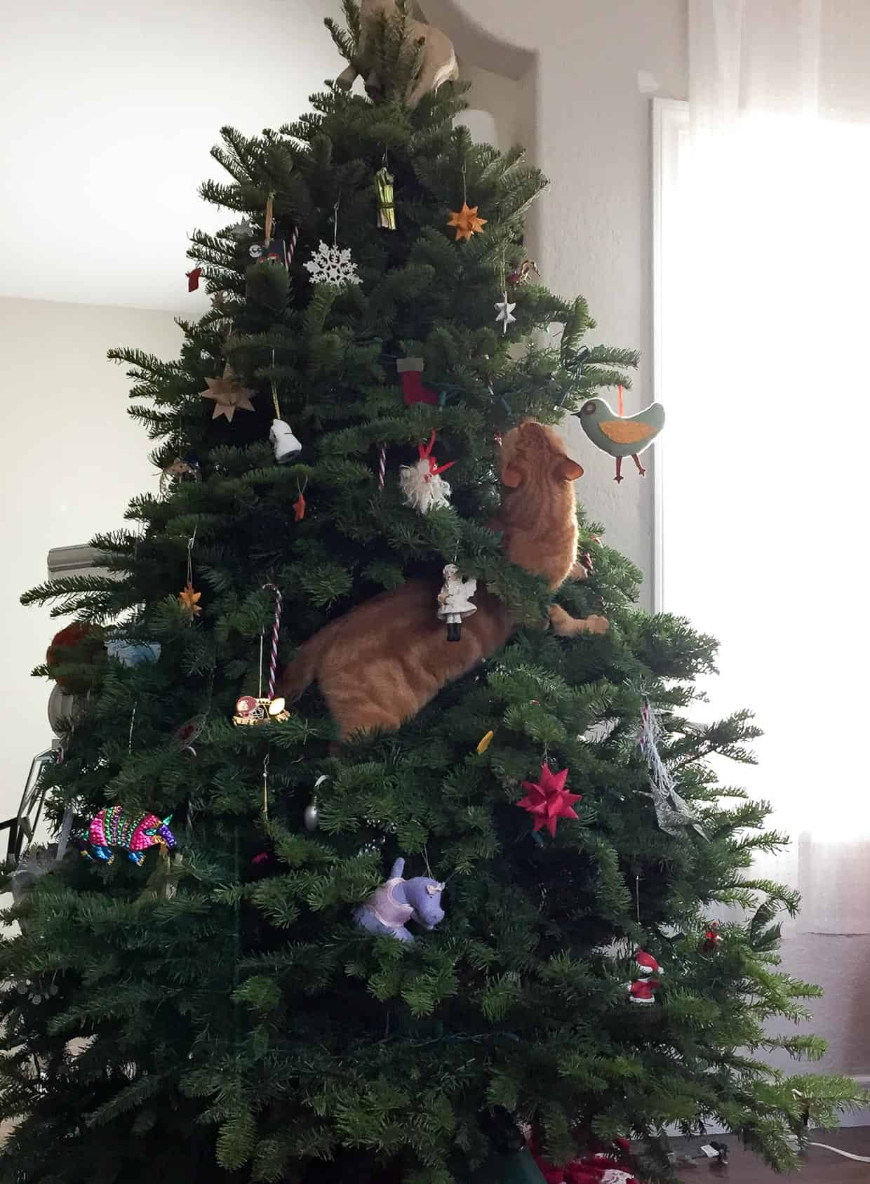 Cat Christmas Tree