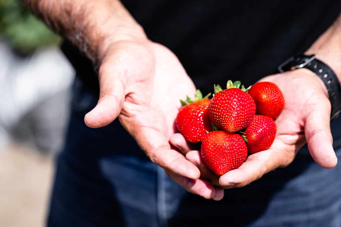 California Strawberry Season